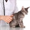 Ветеринарные клиники в Мокшане